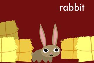 PB3_rabbit