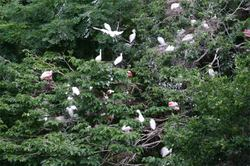 0606zoolotsofbirds